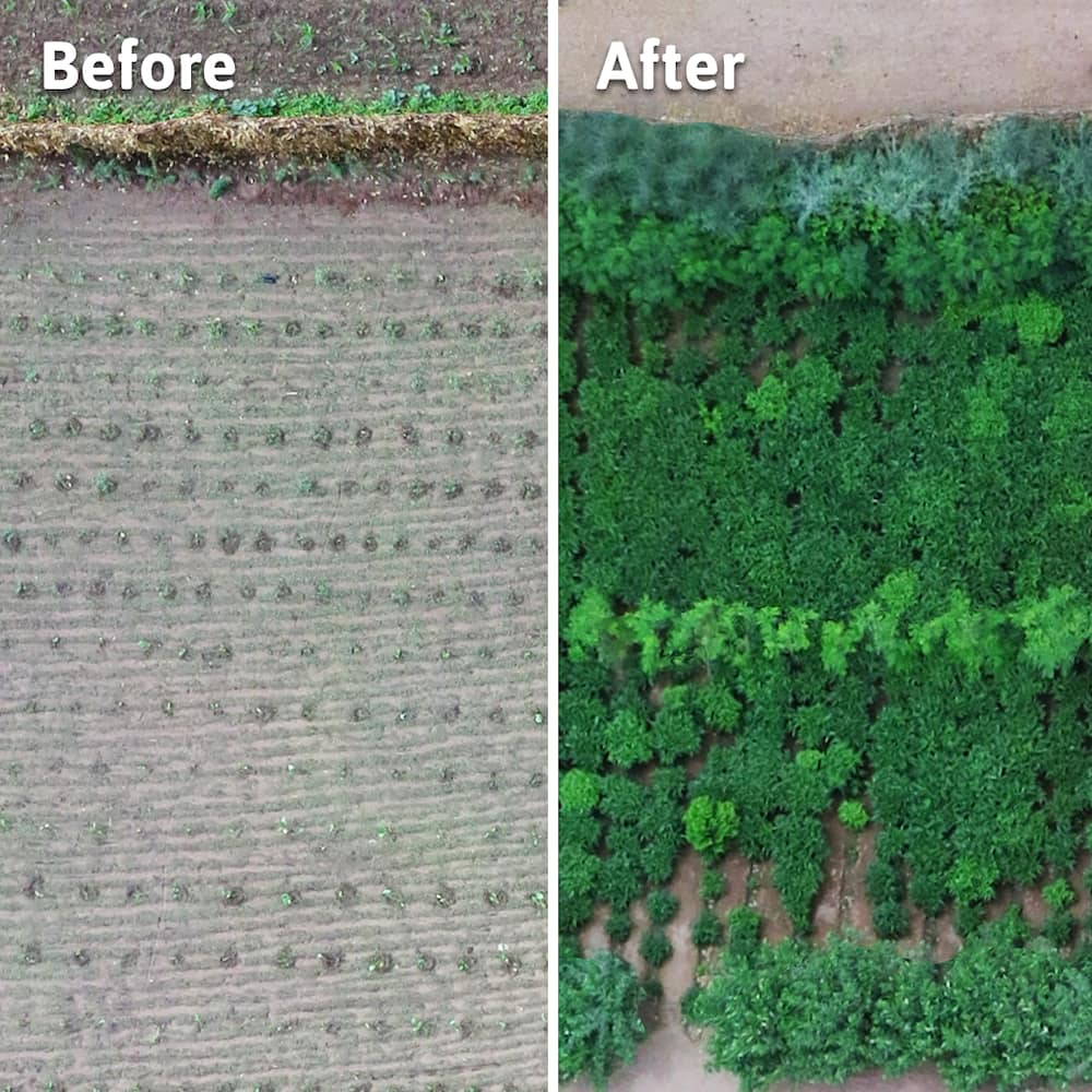Before and after ariel shot of afforested field