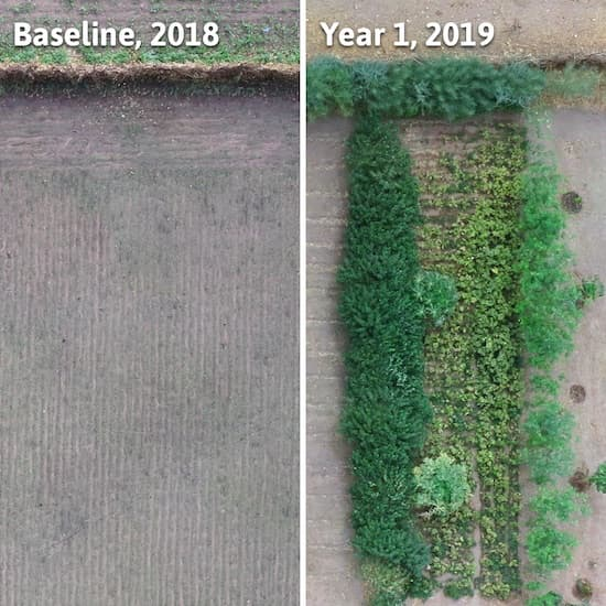 1 year comparison of farming land - first half shows barren, dry, empty land, whereas 2019 show luscious greenery - planted by Trees for the Future