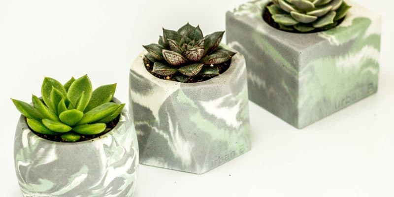 collection of three marbled pots with a succulent in each
